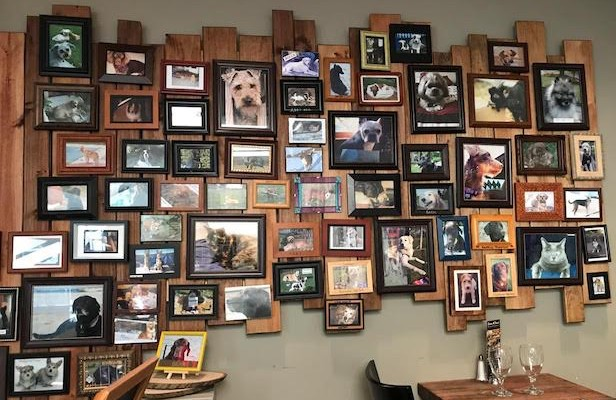 brown hound Picture wall